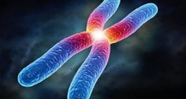 Colangite biliare primitiva: dal cromosoma X nuove indicazioni sulla causa della patologia